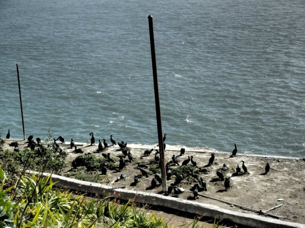Lots of wild birds